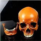 JKFZD Adulto Skull Head Modelo Tamaño de Vida Skull Humano Replica PVC Material Humano Skull Art Mode Sketch (Color : A)