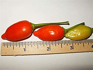 Inca Red Drop, Pepper Seeds, Bushy Plan, Lots of Bright red 1.5 in. Peppers,Aromatic and Fruity Tasting. Good for Pickling or Eating Fresh. (100 Seeds)
