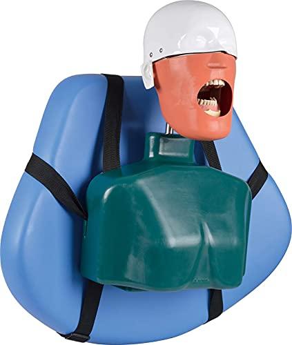 GKPLY Simulatore Dentale Phantom Head Training, Modello di manichino Dentale Vassoio Dentale con Modello di Denti Formazione per la Pratica e l'insegnamento a Dentisti e assistenti dentali.