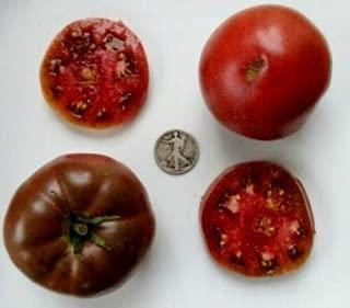 1884 purple tomato