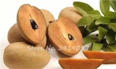 Arbre rares Sapodilla fruits Graines 30 Pcs Coeur Fruit Pour sapotillier Jardin japonais Flore Forme Sweet Like a Mango.fruit 10