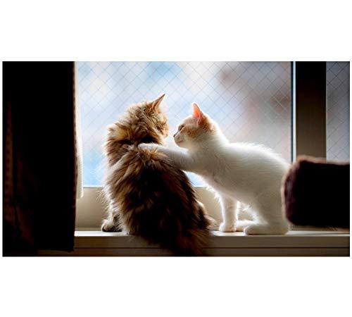 Twee schattige katten op de vensterbank 5D DIY diamant tekening ronde boor volledige boor borduurwerk kristal strass plakken huisdecoratie 50cmx100cm