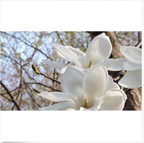 Portal Cool Heiße 10Pcs Aromatische Michelia Alba Blumensamen Magnolia Bonsai Pflanze Hausgarten