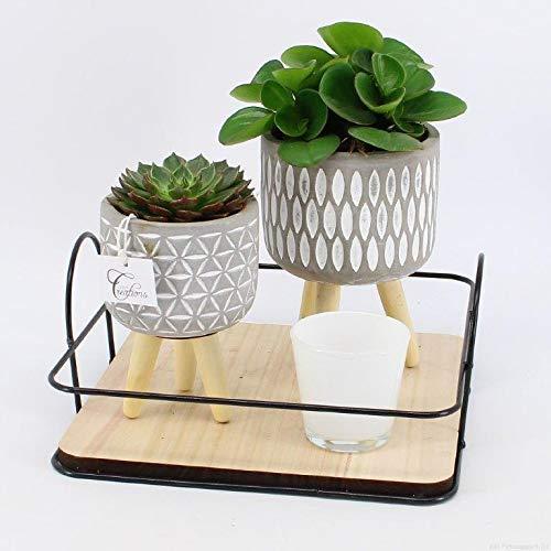 Kamerplanten van Botanicly – 2 × Moederdag cadeau! Pannenkoekenplant + een hippe vetplant + een geurkaars op een hip plantenplateau in pot 'Typ 2' als set – Hoogte: 15 cm, mix 2 – Pilea peperomioides