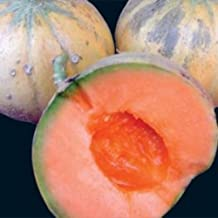 Heirloom French CHARENTAIS MELON Cantaloupe✽75 SEEDS✽Sweet✽FLAT RATE