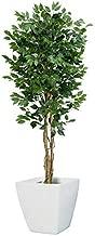 フェイクグリーン 大型 フィカスツリーM 180cm (ナチュラルトランク 天然木) 白鉢セット SC/CT触媒加工済[ngt-2017-m]