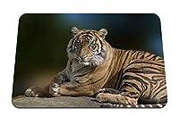 26cmx21cm マウスパッド (虎大きな猫横たわっている恵み美しい捕食者) パターンカスタムの マウスパッド
