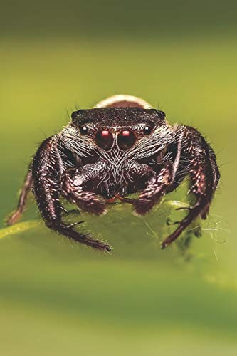 Spinnen Notizbuch: Tagebuch / Notizbuch mit Spinnen Bild als Motiv - 120 Seiten gepunktet (dotgrid) (im Taschenbuchformat | A5+)