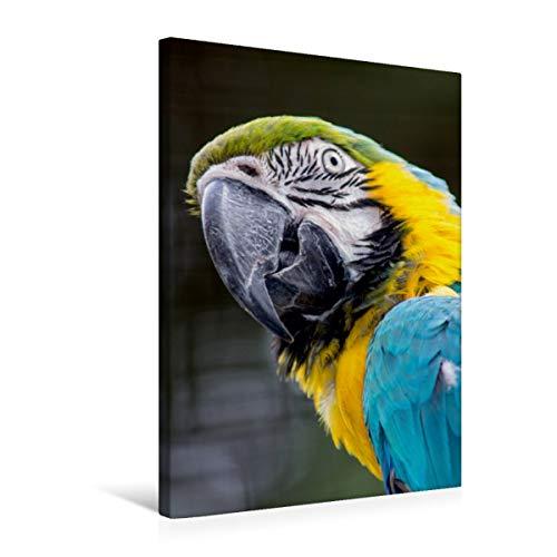 CALVENDO Premium Textil-Leinwand 50 cm x 75 cm hoch, Hallo? | Wandbild, Bild auf Keilrahmen, Fertigbild auf echter Leinwand, Leinwanddruck: Frecher Ara Tiere Tiere