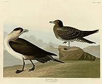 John James Audubon ジクレープリント アート紙 アートワーク 画像 ポスター 複製(リチャードソンのジャガー) #XZZ