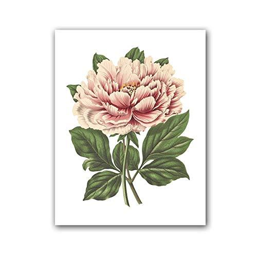 xwwnzdq Pioenroos bloemendruk roze boom pioenroos Botanische illustratie poster plant bloemen vintage muurkunst afbeelding canvas schilderij decor 50x70cm niet-ingelijst