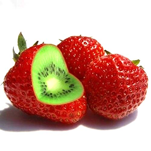 WillowswayW 100/200/400Pcs Strawberry Kiwi Seeds Rare Sweet Fruit Plant Yard Bonsai for Home Garden Planting Strawberry Kiwi Seeds 400PCS