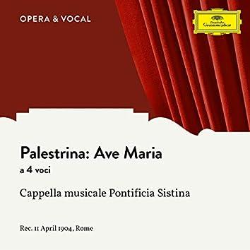 Palestrina: Ave Maria a 4 voci