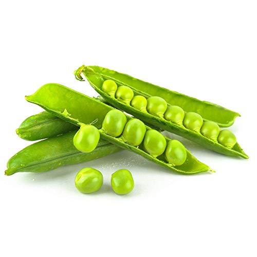ANNONAY NAIN Pisum sativum POIS NAIN à grains ronds 75 grammes