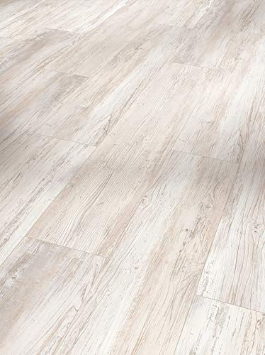 Parador Vinyl Basic 5.3 - Vinylboden Pinie Skandandinavisch weiß - Hochwertiger, elastischer Bodenbelag in Holz-Optik, leise und komfortabel mit Klick-Verlegung - mit V-Fuge