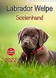 Labrador Welpe - Seelenhund (Wandkalender 2022 DIN A3 hoch)