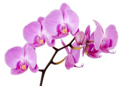 stickersnews–Wandtattoo Blume Orchidee 28x 28cm