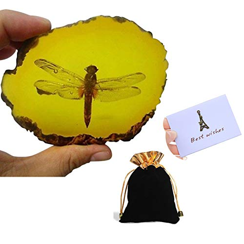 Amber Fossil Insect with Gift Bag and Gift Card,Museum Grade Specimen,Artificial Amber Natural Insect
