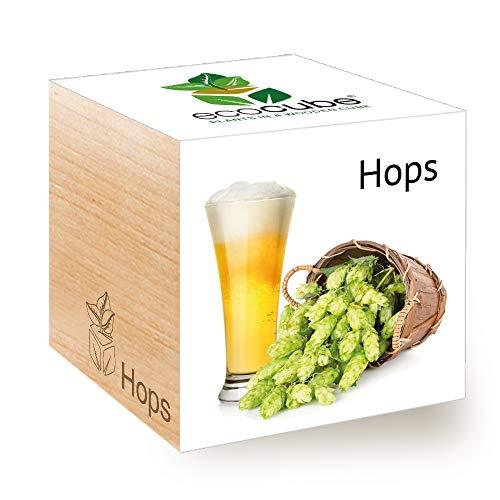 Feel Green Ecocube Hops, kit per coltivare il tuo luppolo (componente della birra) in un cubo di legno realizzato in Austria originale, sostenibile e insolito regalo (100% ecologico)
