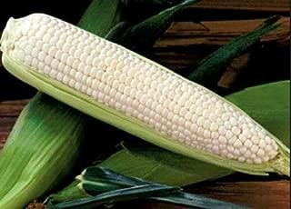Seeds USDA