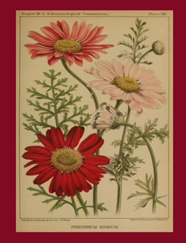 Pyrethrum Roseum Chrysanthemum Journal: Vintage 1882 Art flowered Diary Notebook 160 pages (7.44
