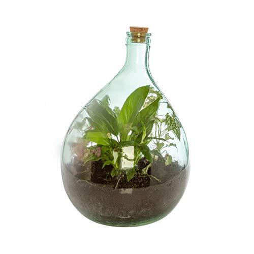 Terrarium in vetro da 5 litri con kit incluso Trasparente