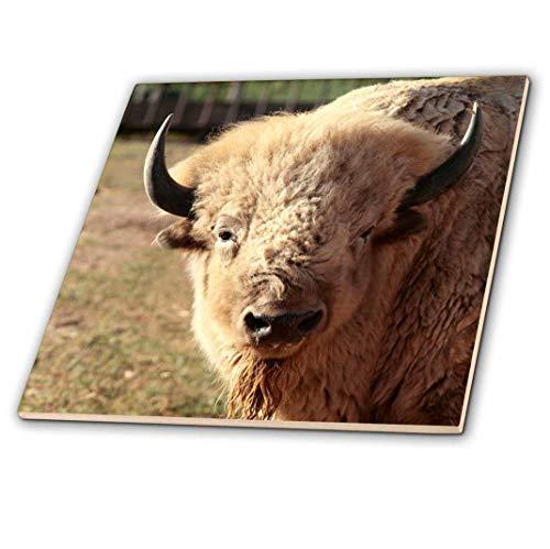 3dRose CT 92633_ 1weiß Buffalo Wildlife, Santa Fe, New Mexico US32jmr0089Julien McRoberts Keramik Fliesen, 10,2cm