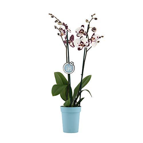 Kunst Pflanze Büro Zier Kunststoff Blume Orchidee im Topf 40 cm hoch