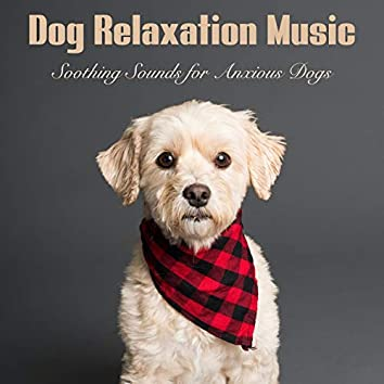 Dog Relaxation Music: Soothing Sounds for Anxious Dogs