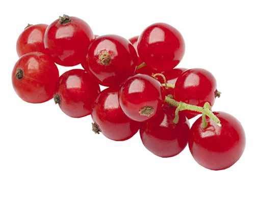 Rote Johannisbeere Ribes r. 'Jonkheer van Tets' 60-70 cm