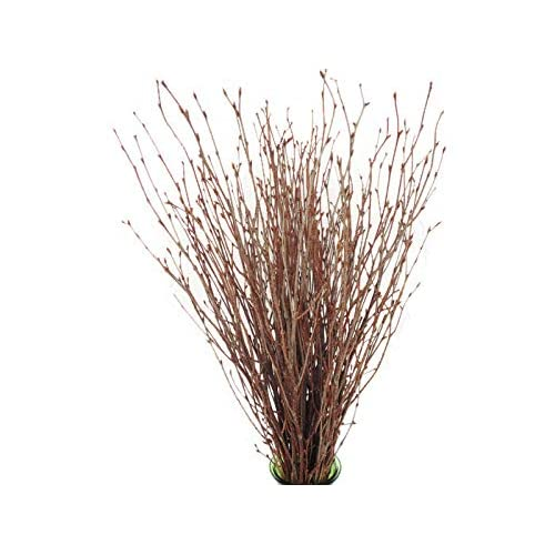 Craft Twigs Amazon Com
