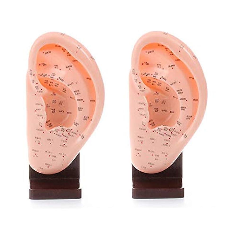 ジョリーアジア解明するスタンド付き耳模型 幅120×高さ250×奥行65mm (2個セット) [ 練習用マネキン 練習用 耳経穴模型 耳ツボ 耳つぼ 人体 模型 耳 イヤー マネキン 整体院 鍼灸院 ]