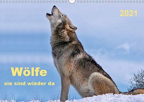 Wölfe - sie sind Wieder da Wandkalender quer A3 2021 In a popularity San Diego Mall DIN