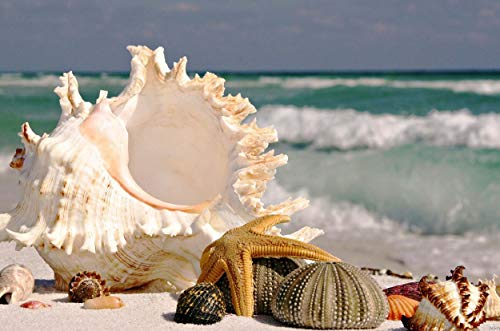 Q&K Beach Shells - 1500 Piece Jigsaw Puzzle Wooden Puzzles Family Funny Decompression Games