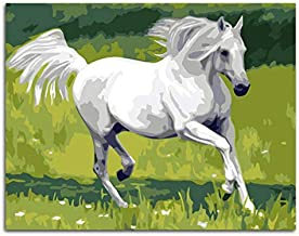 Animal Horse Meadow Running Horse Pintura Por Números White Horse Coloring By Numbers Con Marco 40x50cm