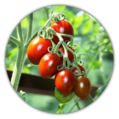 Mexikanische Honigtomate (Miel du Mexique) / 20 Samen/Ertragreiche und Pflegeleichte Sorte/Süße Tomaten