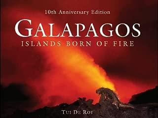 galapagos islands coffee