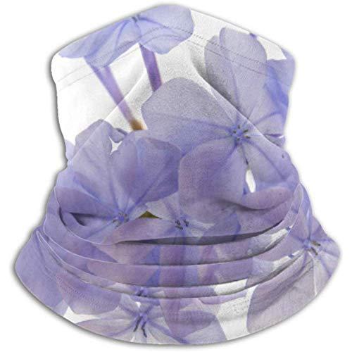 Linger In Calentador de Cuello de Microfibra-Tubo de Polaina de Cuello, Calentador de oídos Diadema Máscara Facial Plumbago Auriculata Plumbago Azul Aislado en