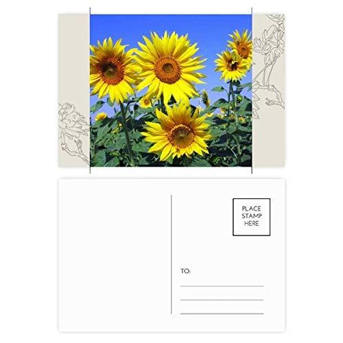 DIYthinker Sonnenschein Blumen Sonnenblumen-blauer Himmel Blumen-Postkarte Set dankt Karte Mailing Side 20pcs 5.7 Zoll x 3.8 Zoll Mehrfarbig