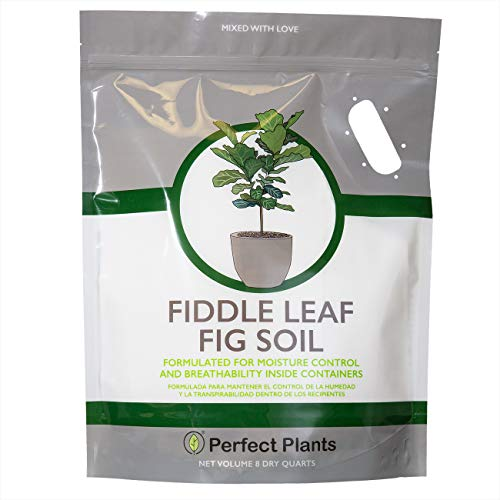 Fiddle Leaf Fig Soil by Perfect Plants 8QTS, Premium Professional Blend for All Fiddle Leaf Figs