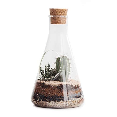 SUCK UK Chemie-Gartenset - Glas