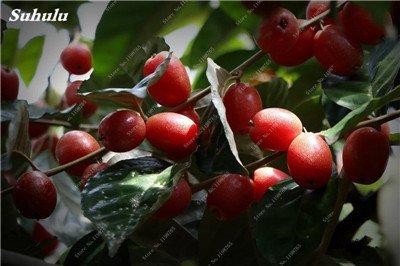 Nouvelle vente 50 pcs fruits de lait de chèvre Graines de bon goût de fruits noirs Brin d'arbres fruitiers Lait de chèvre Bonsai * Grand jardin Plantes vivaces 3