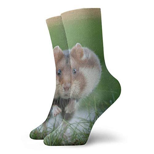 Kevin-Shop Lustige Eichhörnchen Springkissen Crew Socken Essential Sport Wicking Arbeit für Männer und Frauen