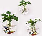 Terrarium-Wand-Pflanzgefäß, rund, hängende Wandvase, Pflanzgefäße für Sukkulenten, Sukkulenten, kleine Kakteen und mehr, Heimwanddekoration | Terrarien | in Geschenkbox, 3er-Set