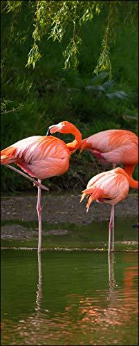 wandmotiv24 Türtapete Flamingos in einem Pool 80 x 200cm (B x H) - Dekorfolie selbstklebend Sticker für Türen, Tür-Bilder, Aufkleber, Deko Wohnung modern M1009