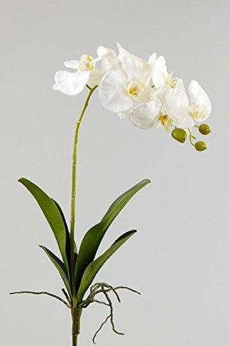 Wunderschöner Phalaenopsiszweig mit Blättern Künstlich - Weiße Blüten - Hochwertig & Naturgetreu (Qualitätsblume) - Phalaenopsis / Orchidee - Länge: 79cm - Einzelblume / Seidenblume zum Dekorieren
