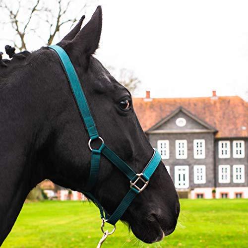 Cavezza per cavalli, per sangue caldo, sangue freddo, pony – Cavezza per stalla e pascolo, 2 fibbie regolabili a 2 posizioni, sicura e antistrappo.