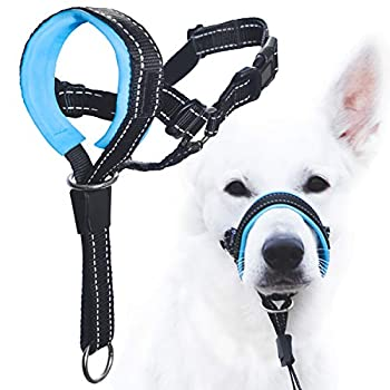 Best dog halter Reviews