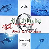 High Quality Digital Image for Professional Dolphin