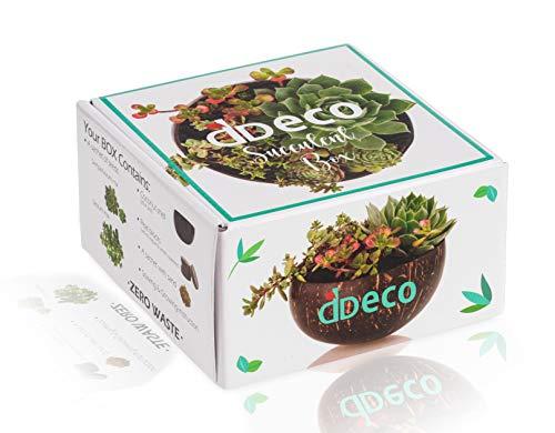 DD ECO® Sukkulenten Kokosnuss-Schale Box - Zero Waste Produkte - der Samen von einfach wachsenden Sukkulenten und Kokosnuss-Schale - das beste kleine Geschenk für Frauen, für Pflanzenliebhaber